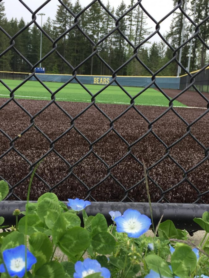 Overlooking+the+back+fence+of+the+baseball+field+where+Varsity%2C+JV%2C+and+C-Team+play+and+practice%2C+at+Tahoma+High+School+in+Maple+Valley%2C+Washington.